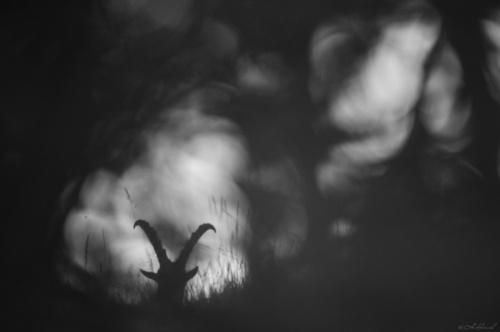 Фотограф Hermann Hirsch (125 фото)