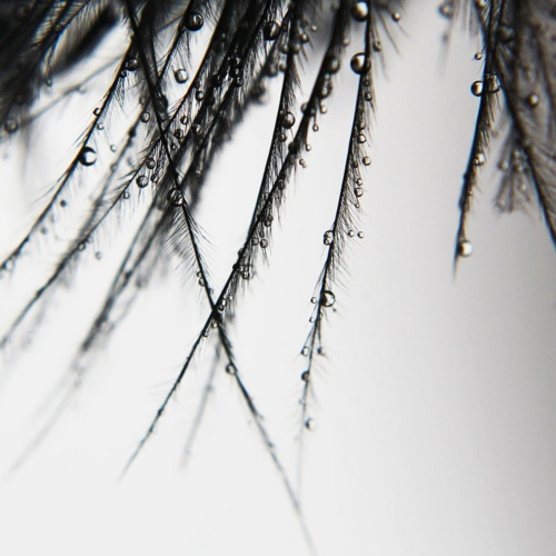 Фотограф под ником Kara-a (83 фото)