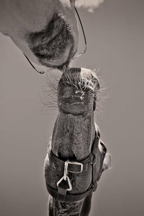 Отличная фотоподборка. Humor №34 (23 фото)