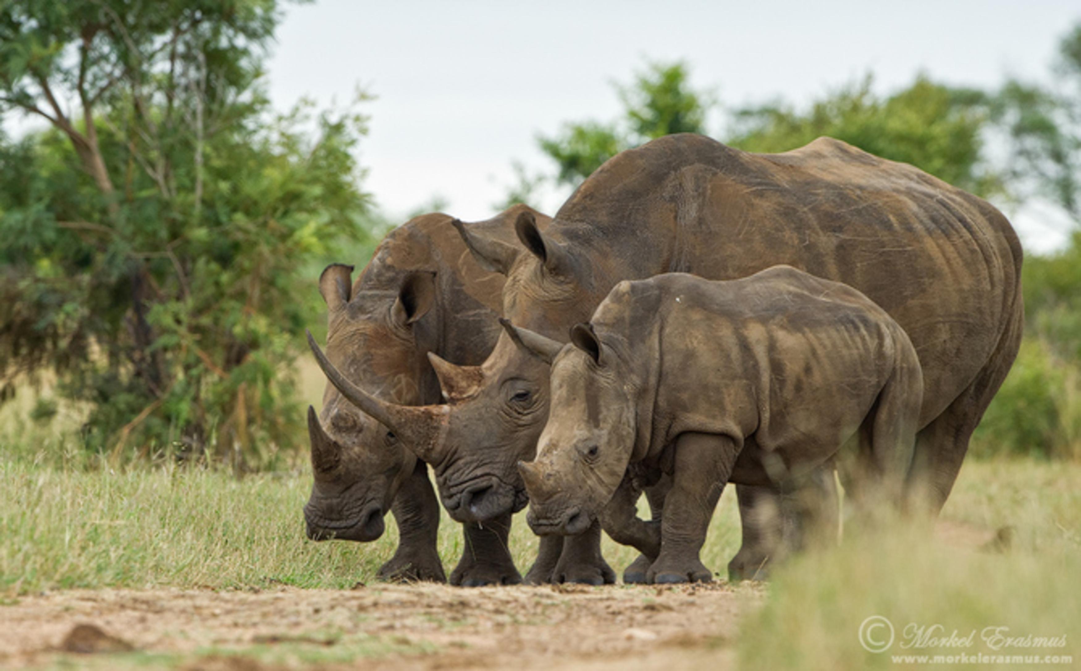 Животные в юар фото 4