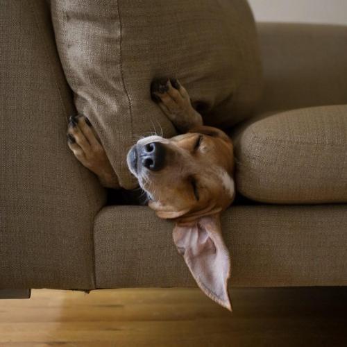 Очаровательная собака Maddie... Фотограф Theron Humphrey (36 фото)
