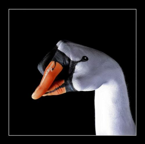 Отличная фотоподборка. Humor №30 (21 фото)
