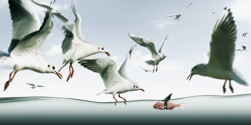 Работы Фотографа - Коэн Демюйнк (Koen Demuynck) (35 фото)