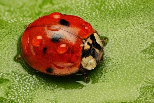 Этот огромный макро Мир#1 - Макропортреты насекомых Душана Бено (Dusan Beno) (29 фото)