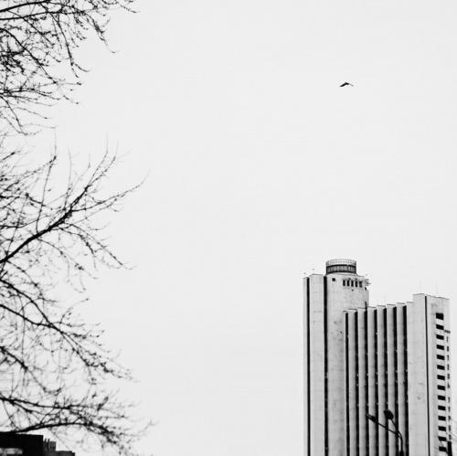 Фотограф Алёна Лобанова (68 фото)