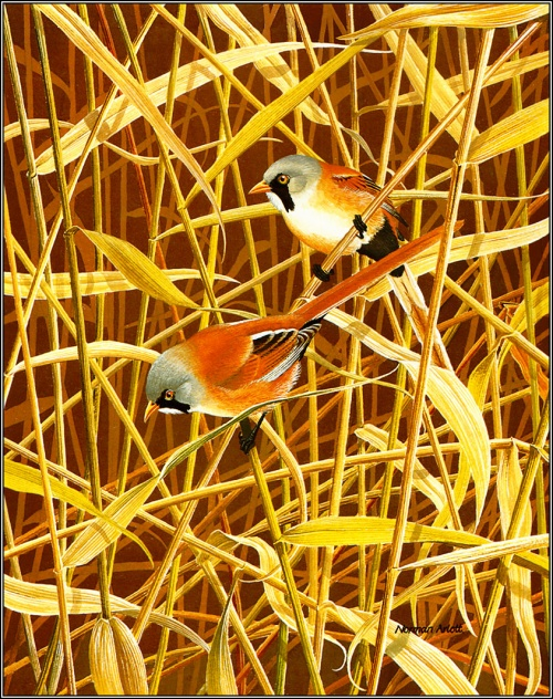 Norman Arlott - Bird Paintings (28 работ)