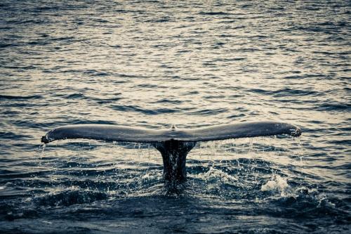 Мир в Фотографии - World In Photo 791 (120 фото)