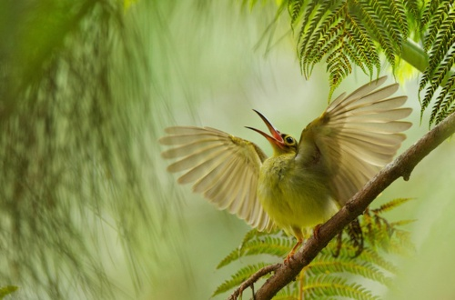 Smithsonian Magazine's 2012 Photo Contest (20 фото)