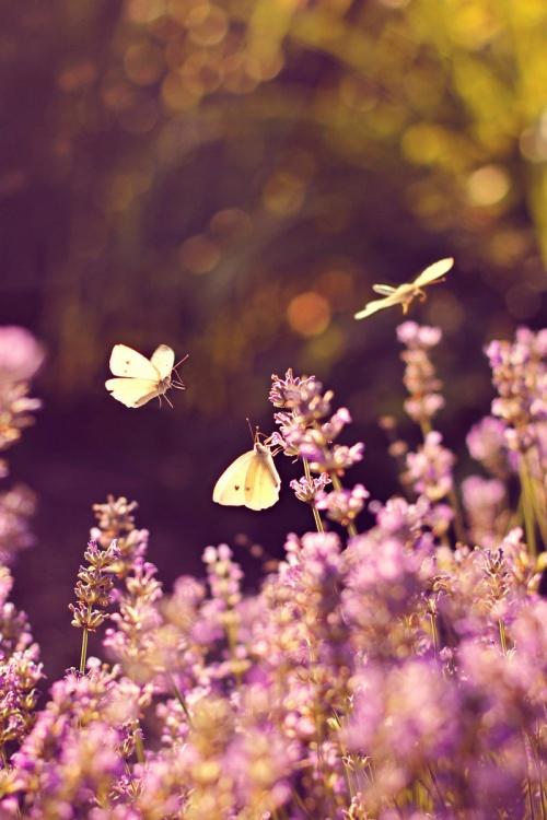 Мир в Фотографии - World In Photo 798 (101 фото)