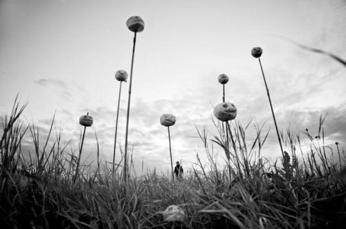 Фотограф Anna Hurtig (58 фото)