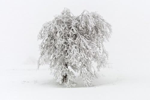 Художник Patrick Hubschmann (67 фото)