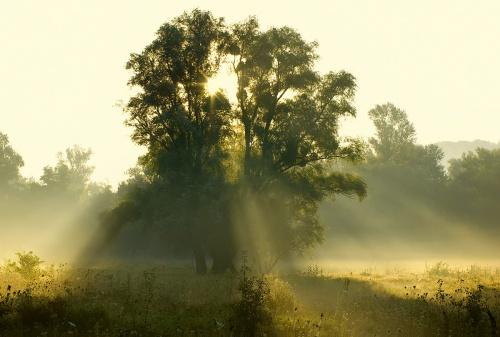 Природа на рассвете (46 фото)