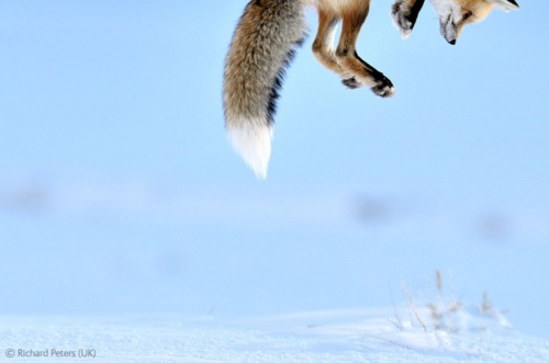 Wildlife Photographer of the Year 2012 (79 фото)