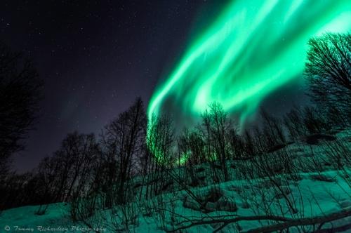 Фотограф Trichardsen (35 фото)