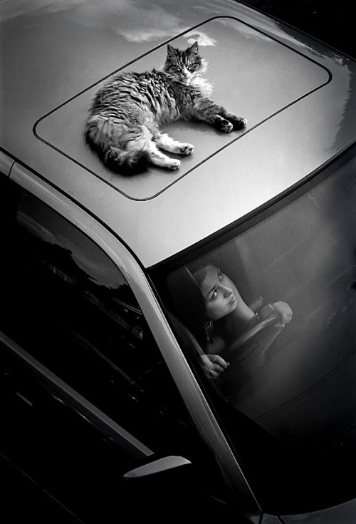 Отличная фотоподборка. Humor №24 (41 фото)