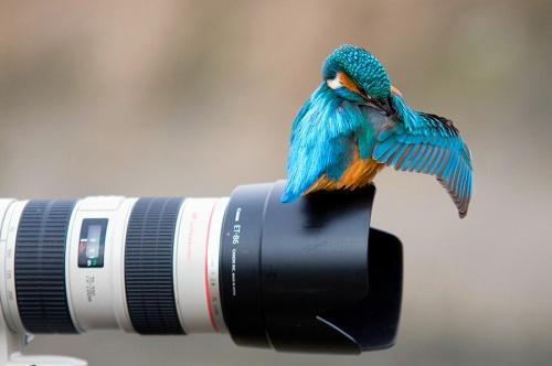 Отличная фотоподборка. Humor №22 (41 фото)
