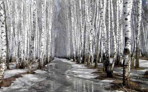Весенний фото клипарт – Деревья распускаются, природа расцветает (53 фото)