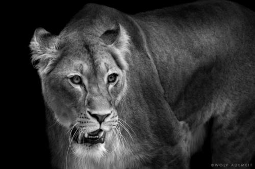 Фотограф Wolf Ademeit (171 фото)