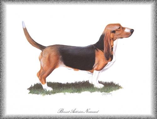 Нарисованные собаки (76 работ)