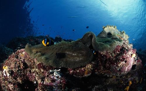 Life Under the Sea (50 фото)