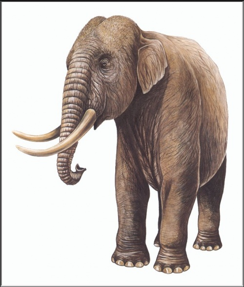 Extinct Animals (112 фото)