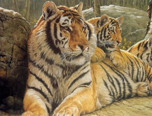 Рисованные коты (27 фото)