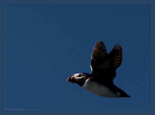 Фото-охота | Photo-Hunt (424 фото)
