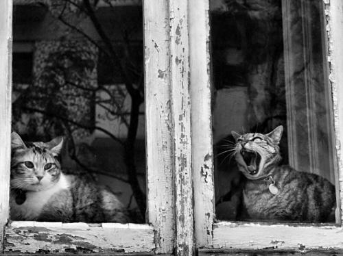 Отличная фотоподборка. Humor №12 (41 фото)