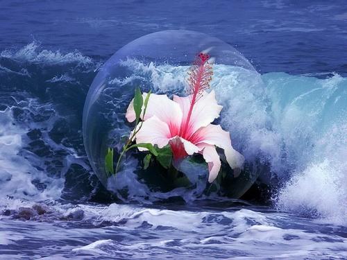 Красота в капельке воды | Beauty in a drop of water (88 фото)