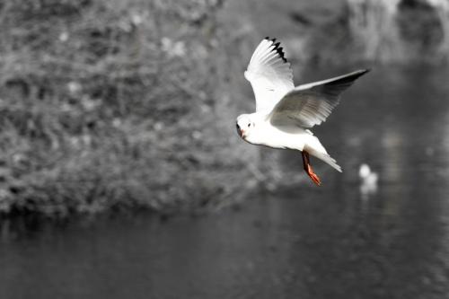 Мир в Фотографии - World In Photo 768 (60 фото)