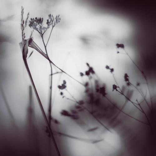 Фотограф Jurgen Heckel (36 фото)