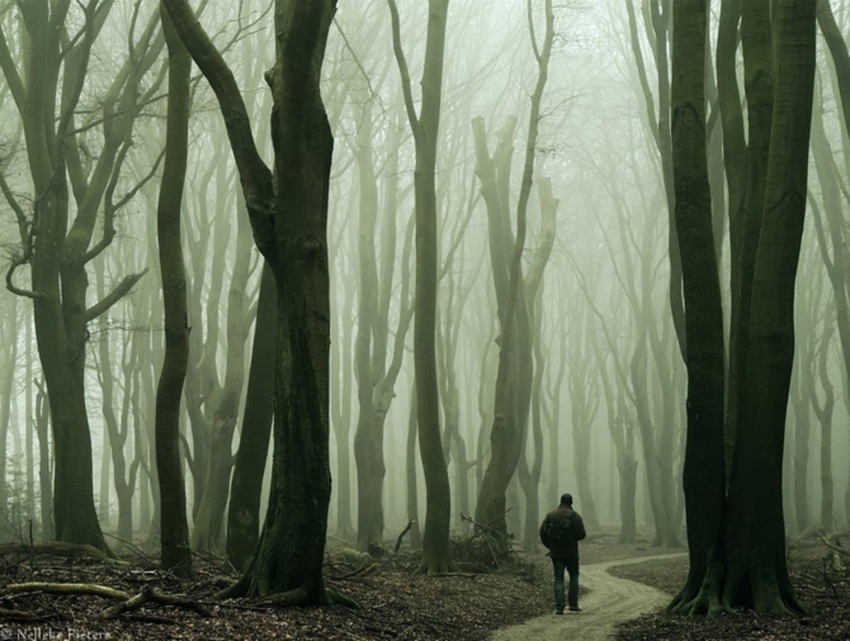 Прохожую в лесу 6 фотография