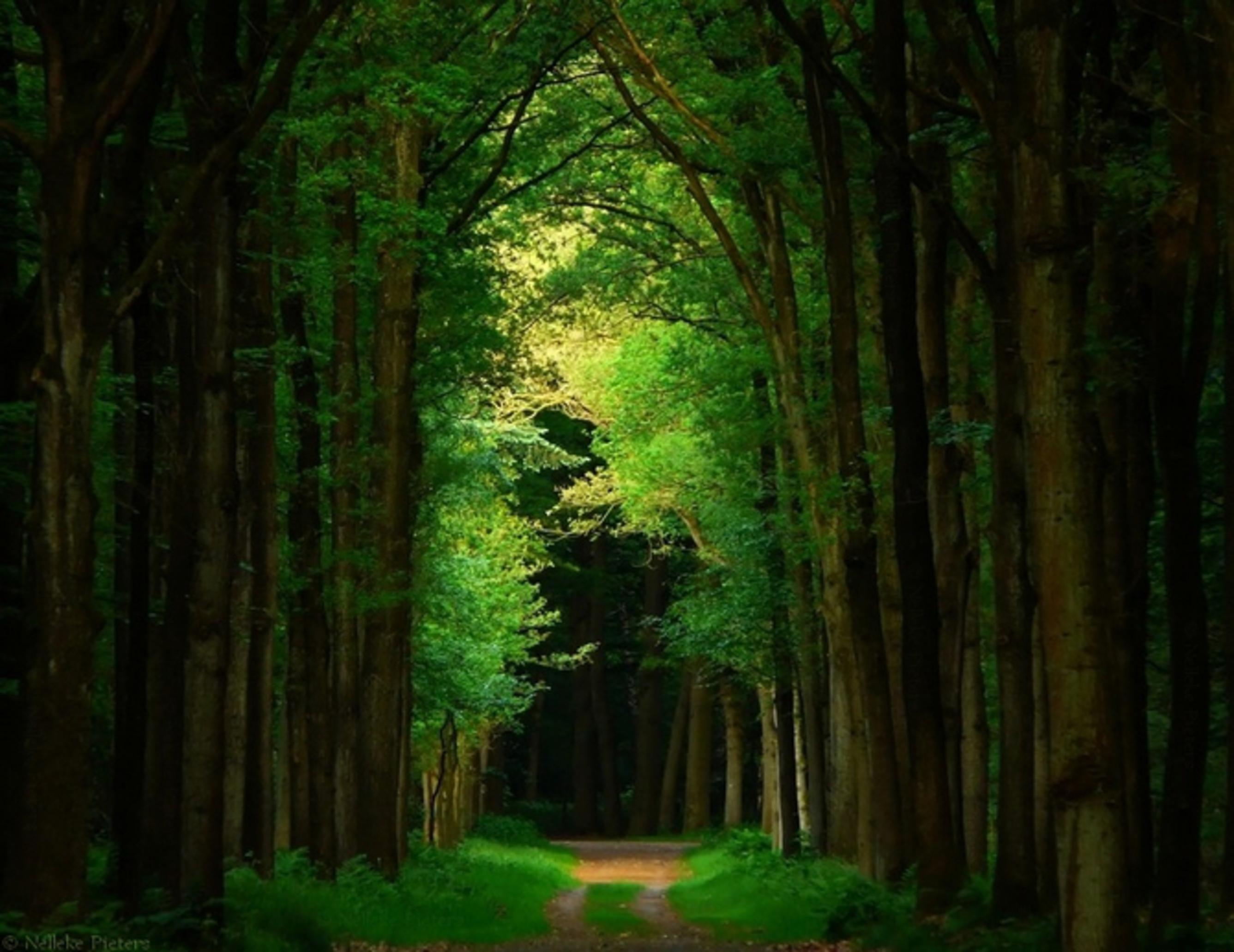 Прохожую в лесу 7 фотография