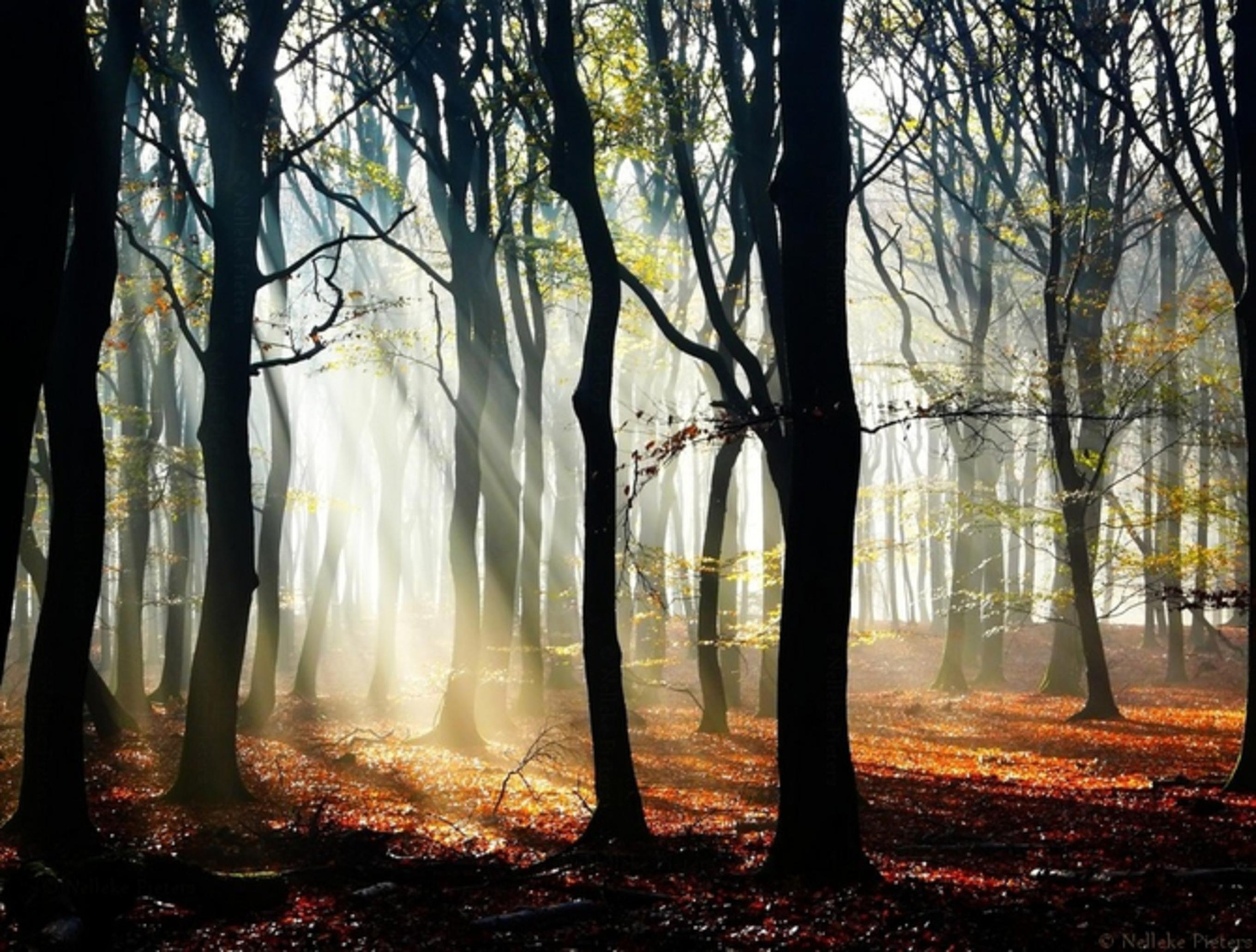 Прохожую в лесу 13 фотография