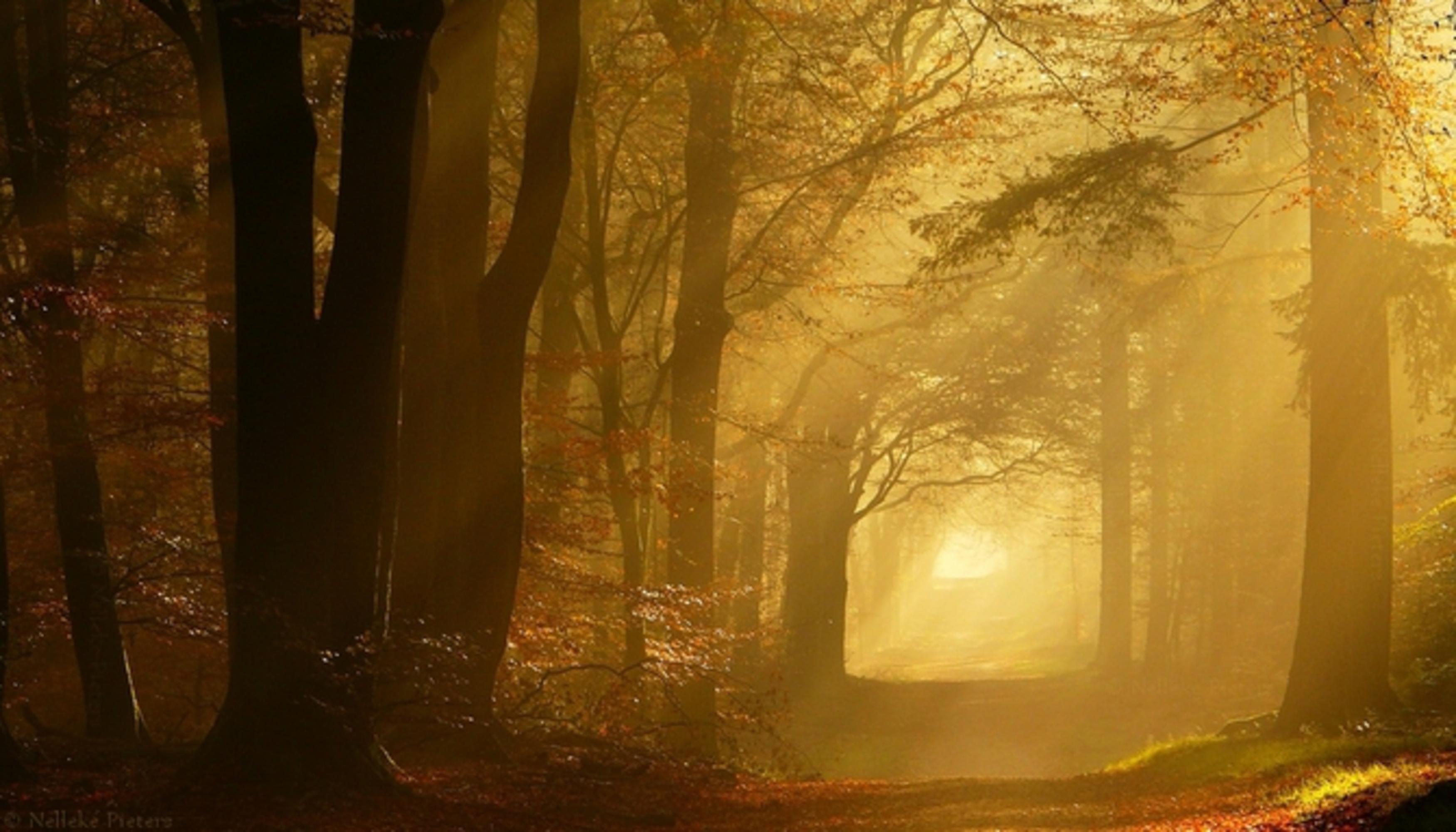 Прохожую в лесу 8 фотография