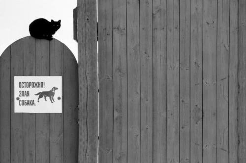 Гигант уличного искусства - Алексей Меньшиков (37 фото)
