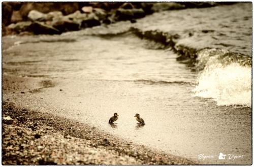 Мир в Фотографии - World In Photo 820 (62 фото)