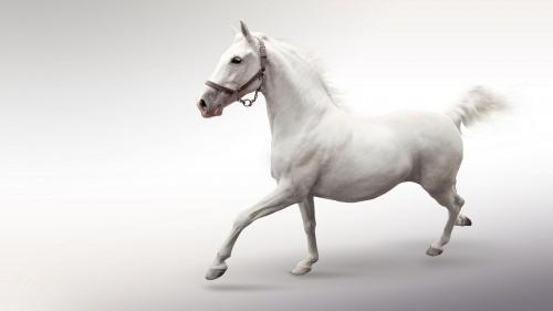 Фото клипарт – Лошади, символ 2014 года (56 фото)