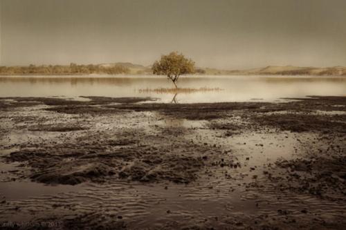 Фотограф Cally Whitham (110 фото)