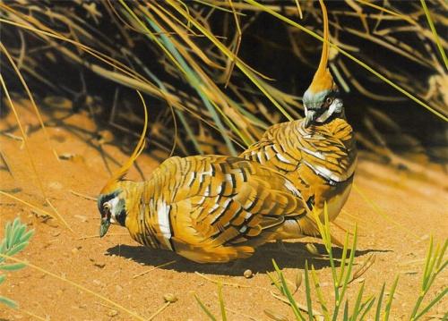 Фото клипарт – Птицы, мир дикой природы (76 фото)