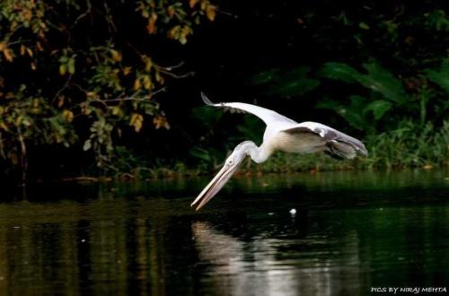 Мир в Фотографии - World In Photo 809 (63 фото)