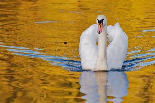 Мир в Фотографии - World In Photo 806 (72 фото)