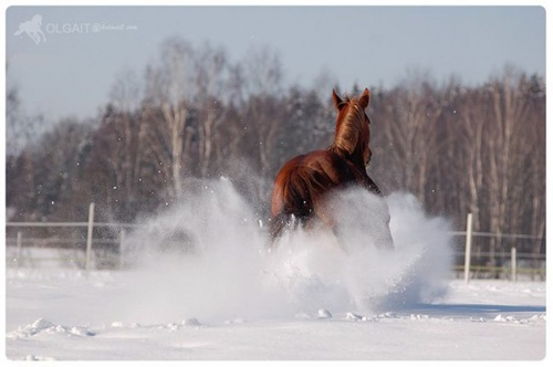 Amazing Horse Photography by Olga Itina (47 фото)