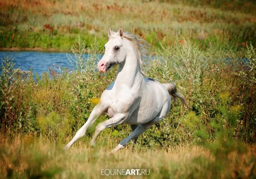 Amazing Horse Photography by Olga Itina (47 фото)
