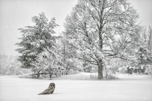 Мир в Фотографии - World In Photo 853 (62 обоев)