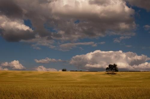 Мир в Фотографии - World In Photo 849 (62 фото)