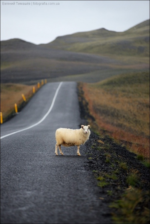 Мир в Фотографии - World In Photo 850 (62 обоев)