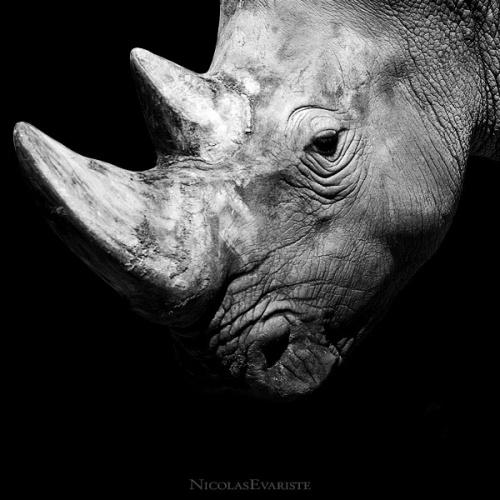 """Проект Nicolas Evariste """"Dark Zoo"""" (44 фото)"""