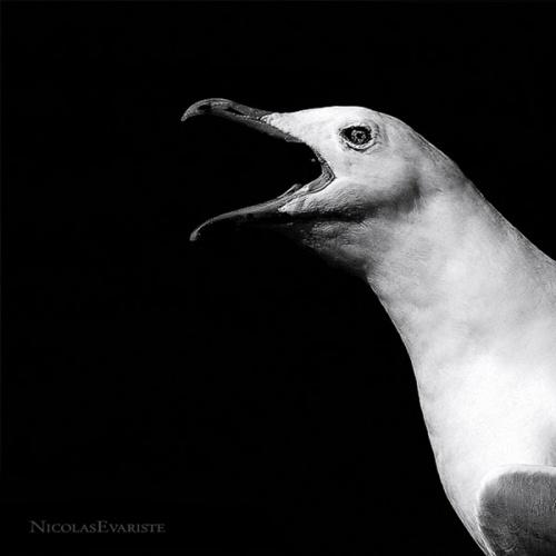"""Проект Nicolas Evariste """"Dark Zoo"""" (44 обоев)"""