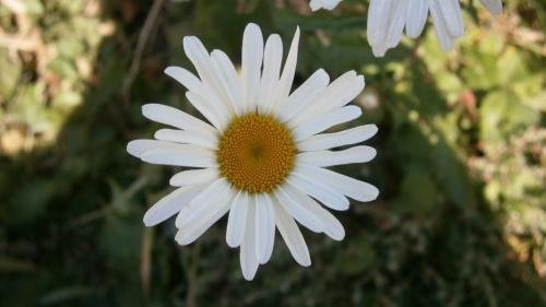 Цветы (18 фото)